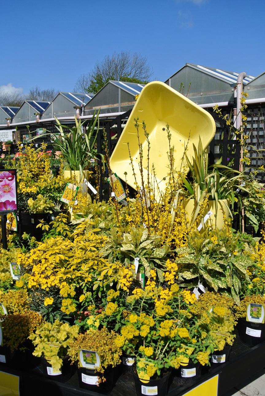 Garden Centre: An Award Winning Plantaria…